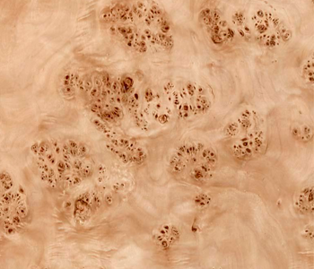 Mapa-Burl-Veneered-Plywood